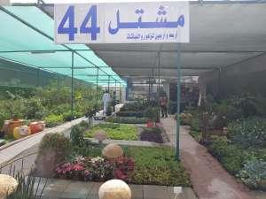 fourty-four-nursery-kuwait