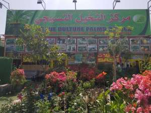 tissue-culture-palms-center-kuwait