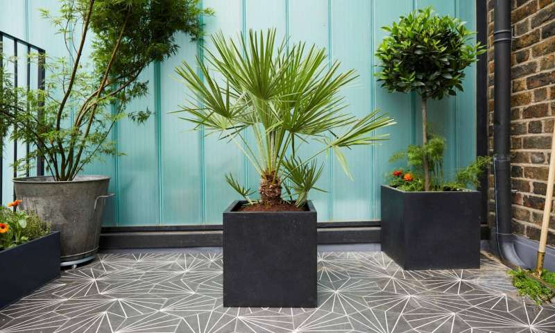 buy-outdoor-plants-online--great-deals-on-mashatel-kuwait