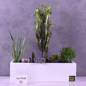 office-desk-plants--buy-office-plants-online-at-best-price in kuwait