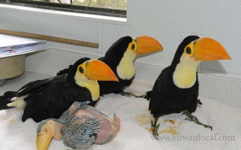 all-babies-toucans-kuwait