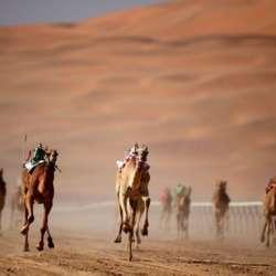 camel-races--kuwait