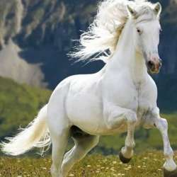 riding-horses-kuwait