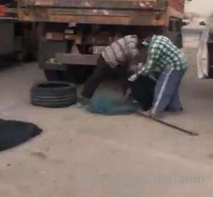 stray-dogs-drugged-not-slaughtered_kuwait