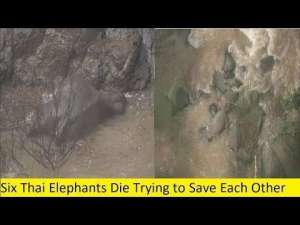 family-of-elephants-all-drown-trying-to-save-calf-whod-slipped-into-waterfall_G2D